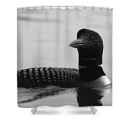 Loon In Calm Waters In Black And White Shower Curtain