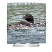 Loon Lullaby Shower Curtain
