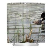 Loon On A Northern Minnesota Lake Shower Curtain