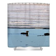Loon On The Arctic Shower Curtain