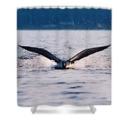 Loon Take Off Aborted Shower Curtain