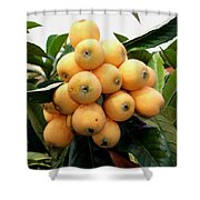Loquat Exotic Tropical Fruit 4 Shower Curtain