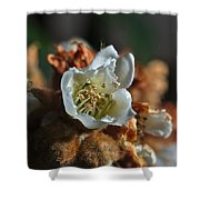 Loquat Flower Shower Curtain