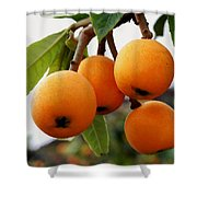 Loquats In The Tree 2 Shower Curtain