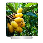 Loquats In The Tree 4 Shower Curtain