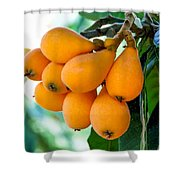Loquats In The Tree 5 Shower Curtain