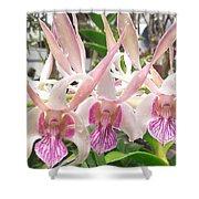 Lorie Mortimer Dendrobium Shower Curtain