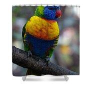 Lorikeet Parrot  Shower Curtain