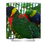 Lory Shower Curtain