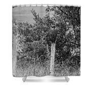 Los Tres Amigos-bw Shower Curtain