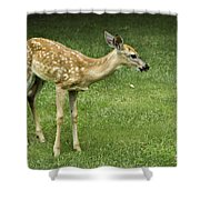 Lost Fawn Shower Curtain