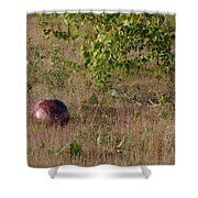 Lost Football Shower Curtain