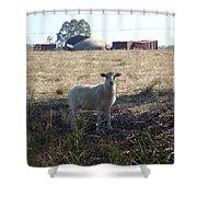 Lost Lamb Shower Curtain