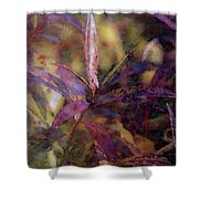 Lost Leaves Decorated In Purple 6003 Ldp_2 Shower Curtain