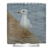 Lost Seagull Shower Curtain