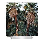 Thousand Palms Oasis  Shower Curtain