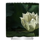 Lotos And Dragonfly Shower Curtain