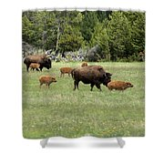 Lots Of Calves Shower Curtain