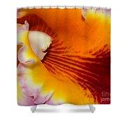Lotsa Color Shower Curtain