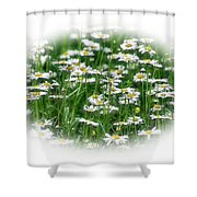 Lotsa Daisies Shower Curtain