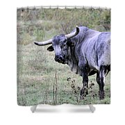 Lotta Bull Shower Curtain by Jan Amiss Photography