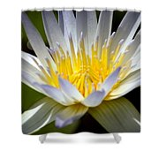 Lotus 10 Shower Curtain