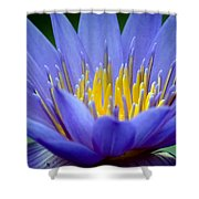 Lotus 6 Shower Curtain