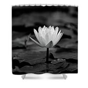 Lotus Blooms Shower Curtain