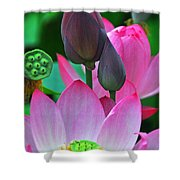 Lotus Blossoms  Shower Curtain