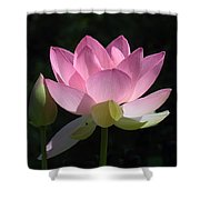 Lotus Bud--snuggle Bud Dl005 Shower Curtain by Gerry Gantt