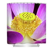 Lotus Central Detailed Shower Curtain