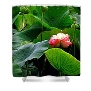 Lotus Forms Shower Curtain