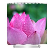Lotus In Pink Shower Curtain