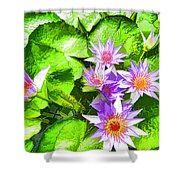 Lotus In Pond Shower Curtain