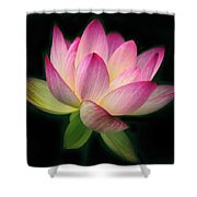 Lotus In The Limelight Shower Curtain