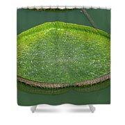 Lotus Leaf In The Marsh Shower Curtain