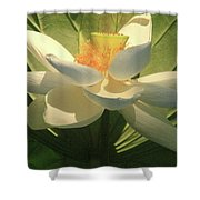 Lotus Light Shower Curtain