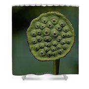 Lotus Pod Shower Curtain