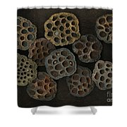 Lotus Pods Shower Curtain by Christian Slanec