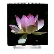 Lotus--purity 24o Shower Curtain