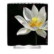 Lotus Reaching For The Sun Shower Curtain