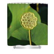 Lotus Seed Pod 1 Shower Curtain
