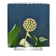 Lotus Seed Pod 2 Shower Curtain