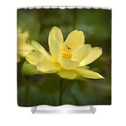 Lotus With Bee Shower Curtain