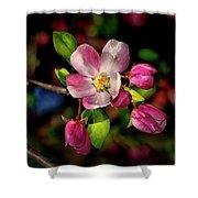 Louisa Apple Blossom 001 Shower Curtain