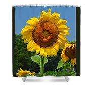 Louisa, Va. Sunflower 6 Shower Curtain