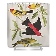 Louisiana Tanager Or Scarlet Tanager  Shower Curtain