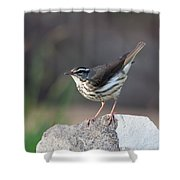 Louisiana Waterthrush Shower Curtain