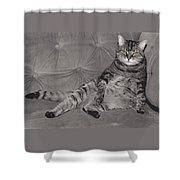 Lounge Cat Shower Curtain