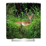 Lounging Fawn Shower Curtain